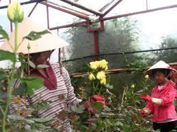 Lãng phí điện năng trong trồng hoa do thiếu kiến thức
