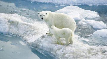 7 điều giúp giảm nóng của trái đất